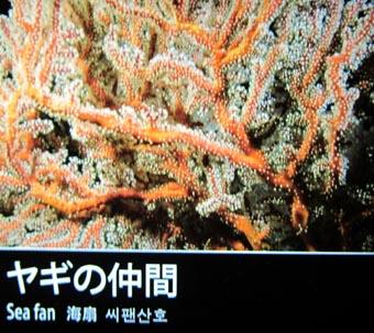 和英海洋辞典&辞書 Japanese-English Ocean Dictionary